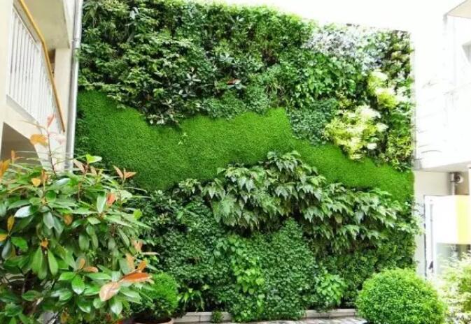 植物墙的养护及常见误区